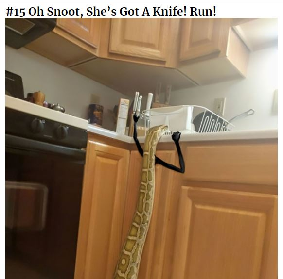 Oh Snoot, She's Got A Knife! Run!